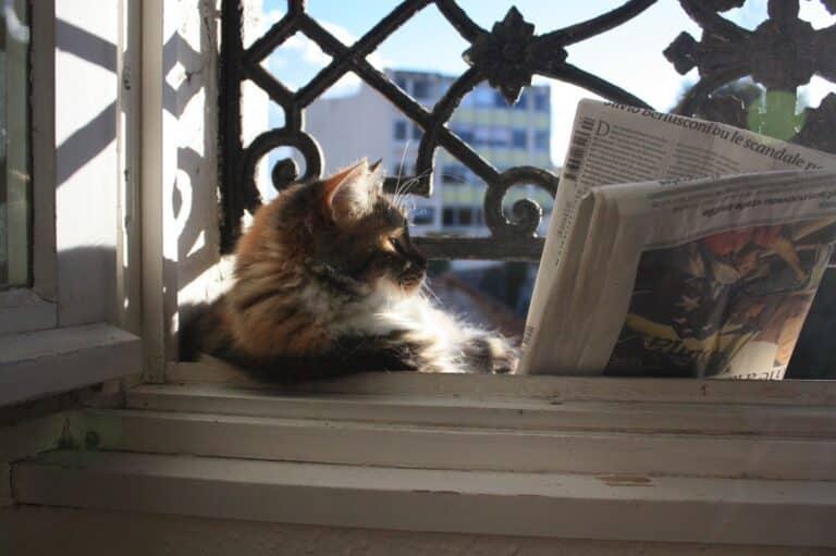 chat lisant le journal à la fenêtre